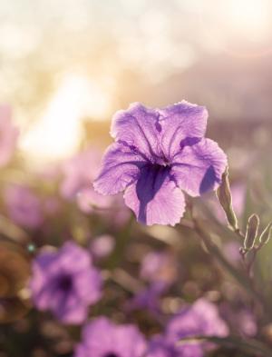 december is violet month