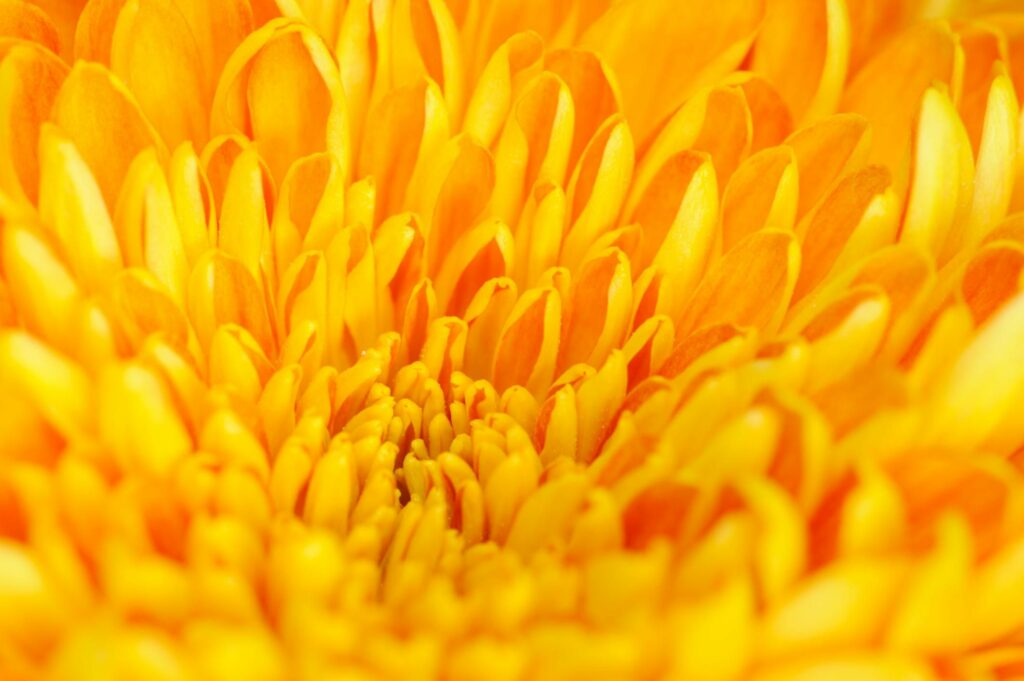 july is the colour yellow - yellow flower petals